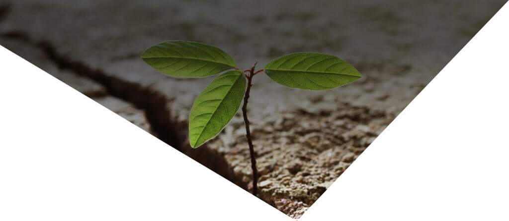 A graphic of a plant photo with a diagonal square overlay on a white background.